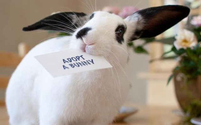 Adopting information rabbits life