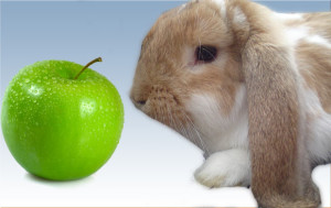 Can I Give My rabbit Apples