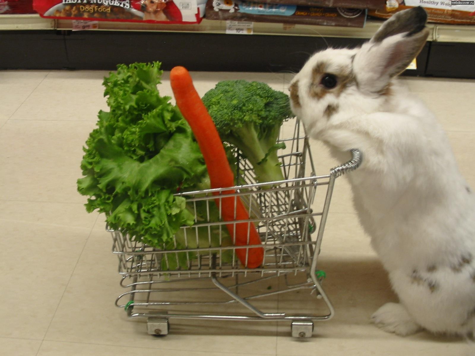 How to Feed Your Bunny Vitamins advise