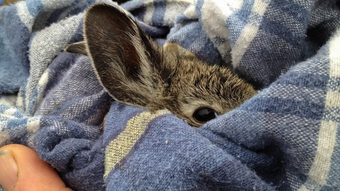 Can I Give My Rabbit A Blanket Rabbits Life