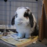 Can I Give My Rabbit a Phone Book