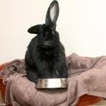 Can I feed my rabbit dog food