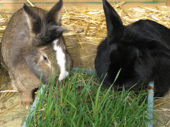 Rabbit Grass and Hay