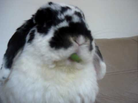 Rabbit eating green beans