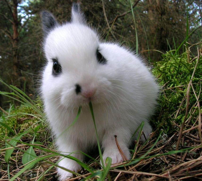 Feed Rabbit Baby Food