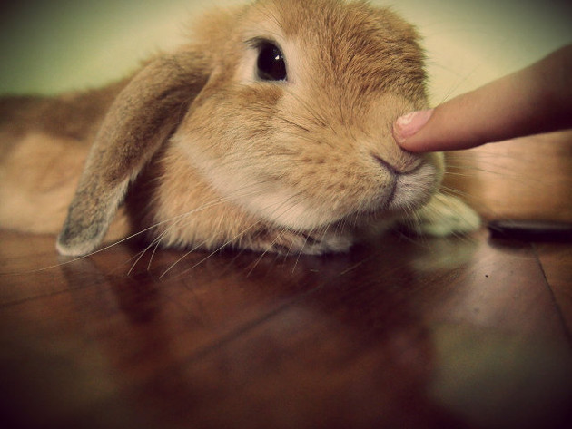 How To Play With Your Bunny?