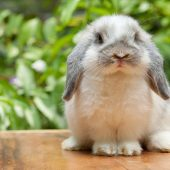 How Long Do Pet Rabbits Live?