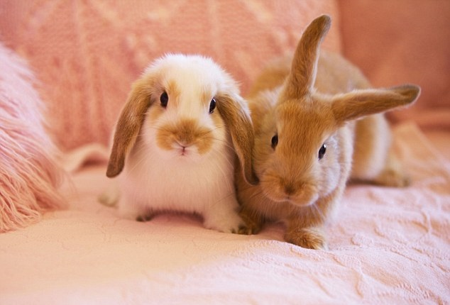 Thinking About Having A Rabbit As A Pet?