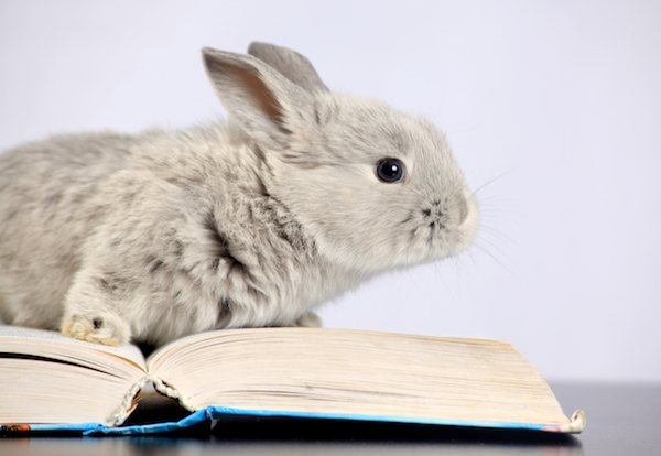 What do rabbits eat to have a longer life