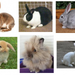 Pet Rabbit Breeds To Choose From