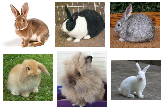 Pet Rabbit Breeds | Choosing The Right One For You