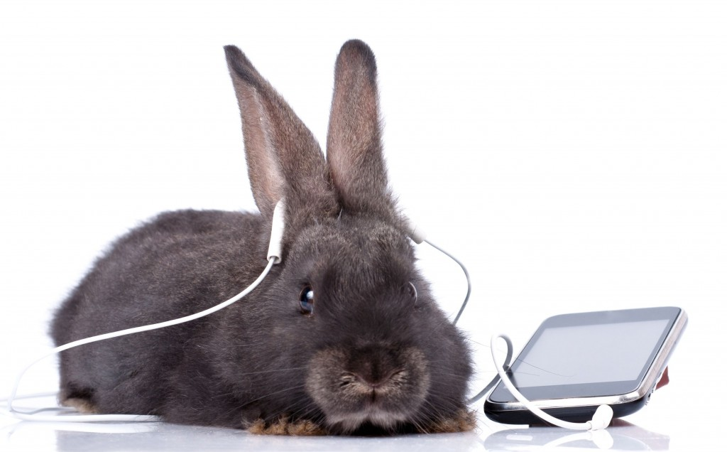 Amazing Variety Of Rabbit Sounds And Noises
