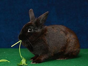 Adopt a rabbit in illinois Amy