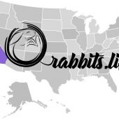 Adopt a rabbit in California