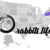 Adopt a rabbit in Pennsylvania