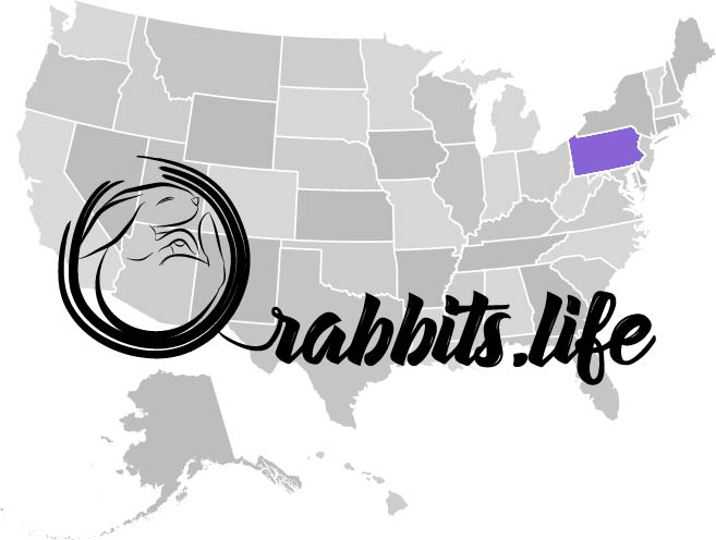 Adopt or buy a rabbit in pennsylvania