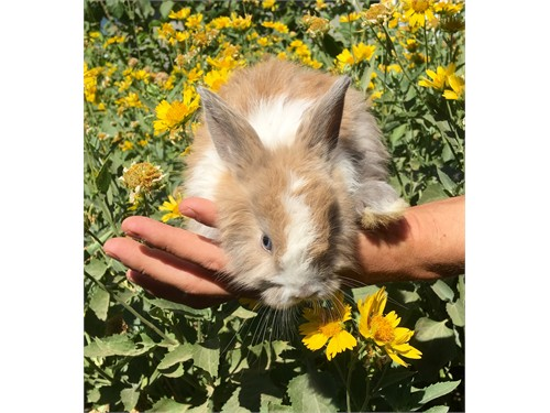Bunny rabbits need homes rabbits for sale in california
