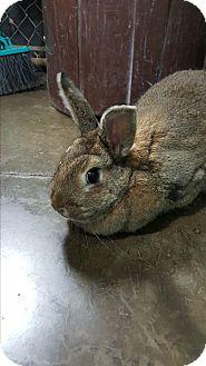 Dimitri adoption rabbit