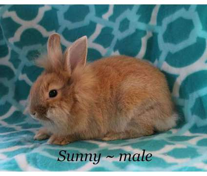 Sunny male buy a rabbit