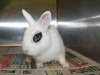 adopt a rabbit in California Treasure