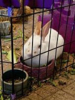 adopt a rabbit in florida Juno