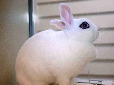 adopt a rabbit in florida melody