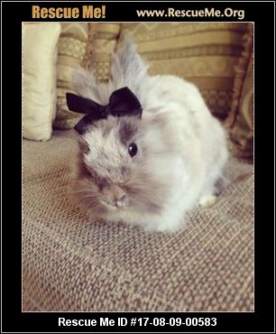 adopt a rabbit in texas buga