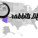 Adopt or buy a rabbit in Arizona