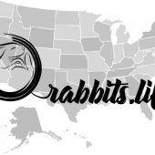 Adopt a rabbit in Connecticut