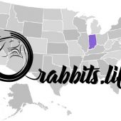 Adopt a rabbit in Indiana