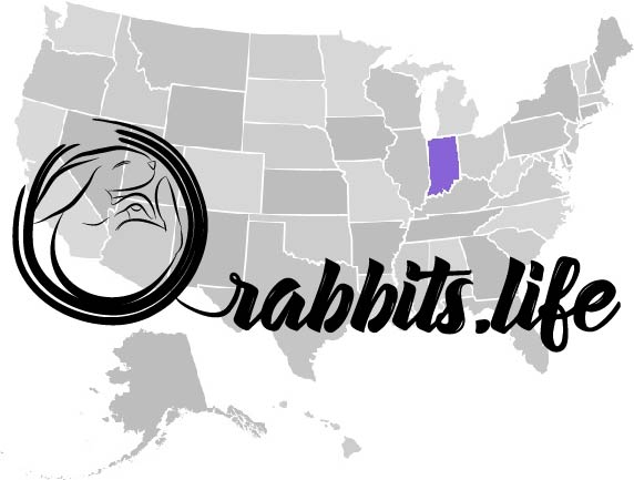 Adopt or buy a rabbit in Indiana