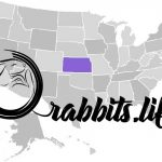 Adopt or buy a rabbit in Kansas