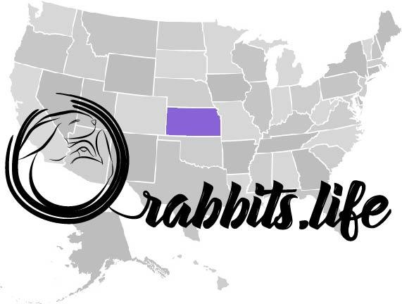 Adopt or buy a rabbit in Kansas