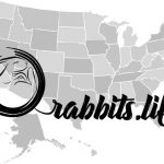 Adopt or buy a rabbit in Maine