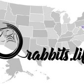 Adopt a rabbit in Maryland