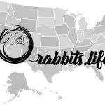 Adopt or buy a rabbit in Massachusetts