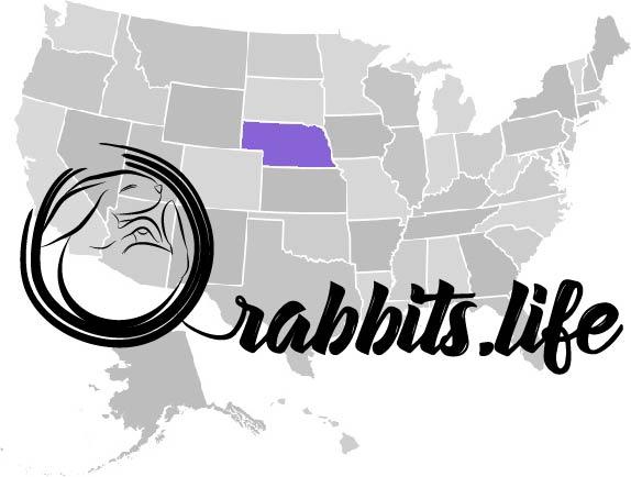 Adopt or buy a rabbit in Nebraska