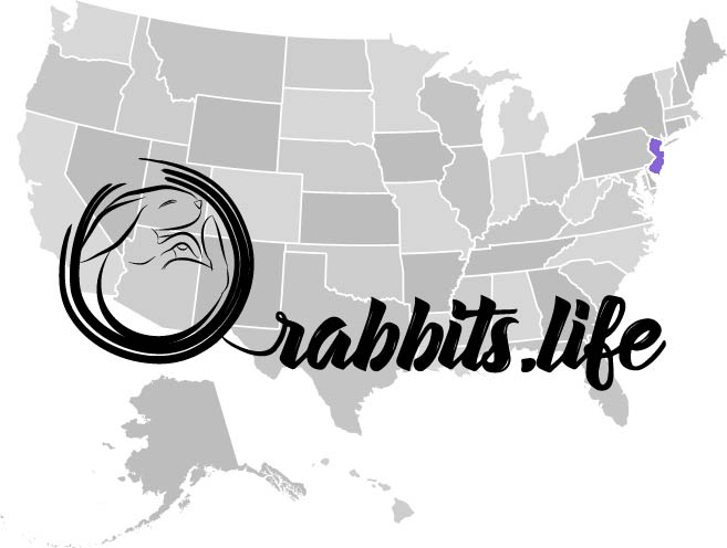 Adopt or buy a rabbit in New Jersey