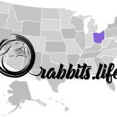 Adopt a rabbit in Ohio