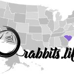 Adopt or buy a rabbit in South Carolina