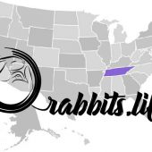 Adopt a rabbit in Tennessee