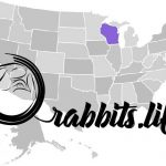 Adopt or buy a rabbit in Wisconsin