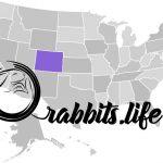 Adopt or buy a rabbit in colorado