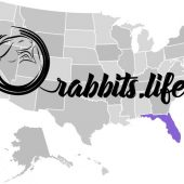 Adopt a rabbit in Florida
