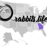 Adopt or buy a rabbit in georgia