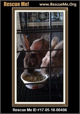 adopt a rabbit in Arizona Hershey and Reese
