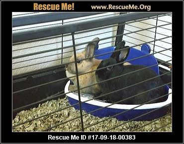 adopt a rabbit in Arizona Lucy and Sandy