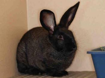 adopt a rabbit in Colorado Bundles