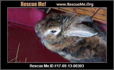 adopt a rabbit in Colorado Kiko