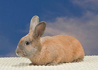 adopt a rabbit in Georgia Abner